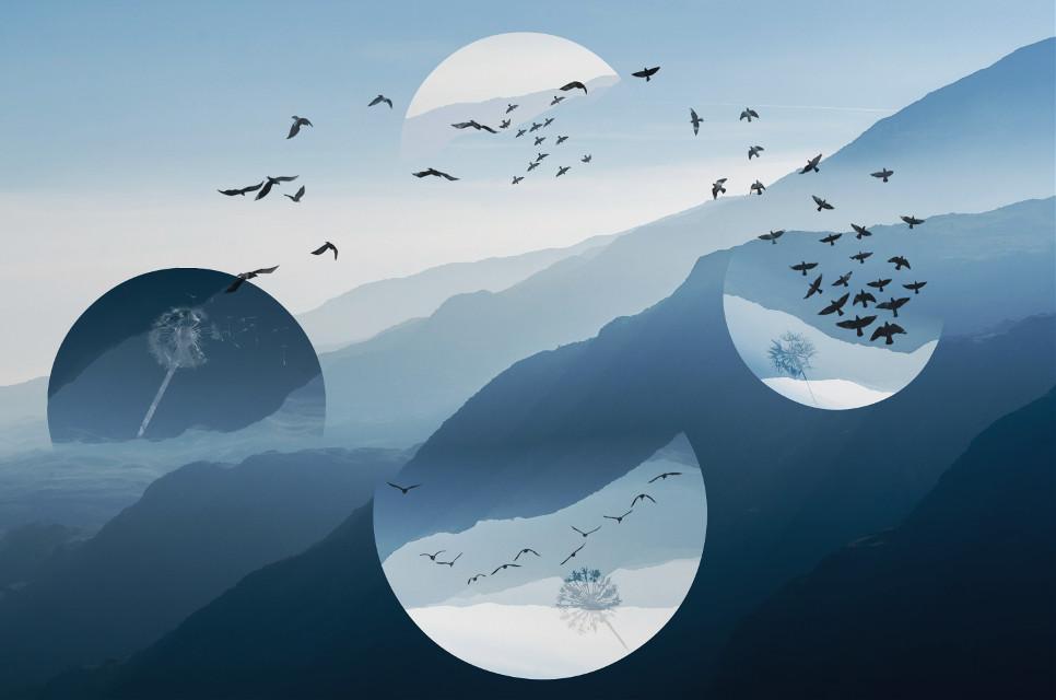 #birds #clipart #blue #free #freedom #upsidedown #overlay #edited   Original Picture: unsplash.com