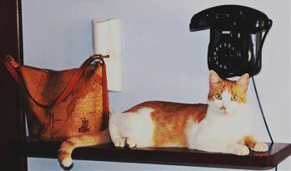 cat eye eyes gatto