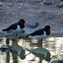 photography nature mirroring petsandanimals animals