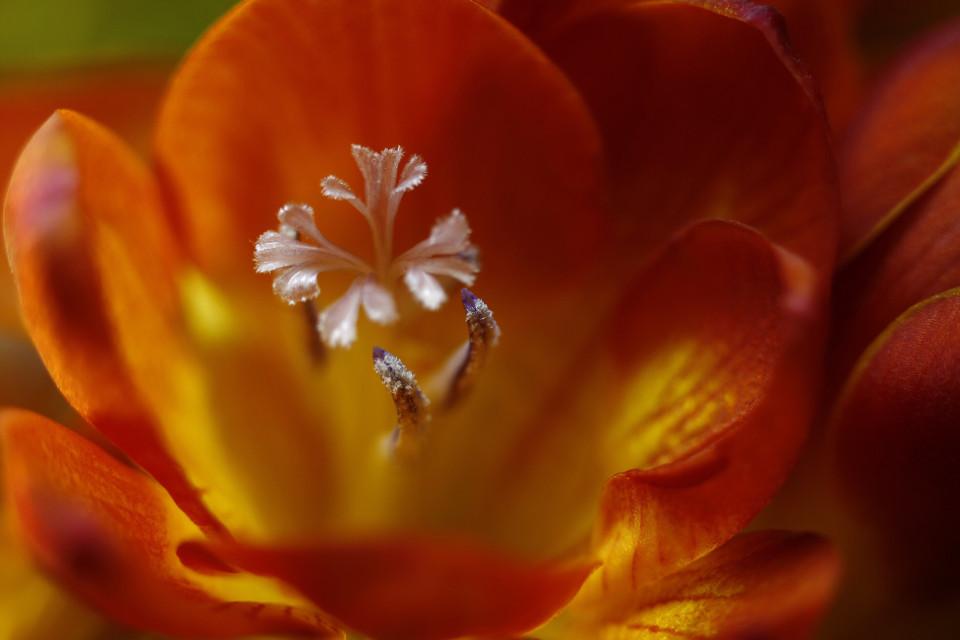 #flower #closeupphoyograhy