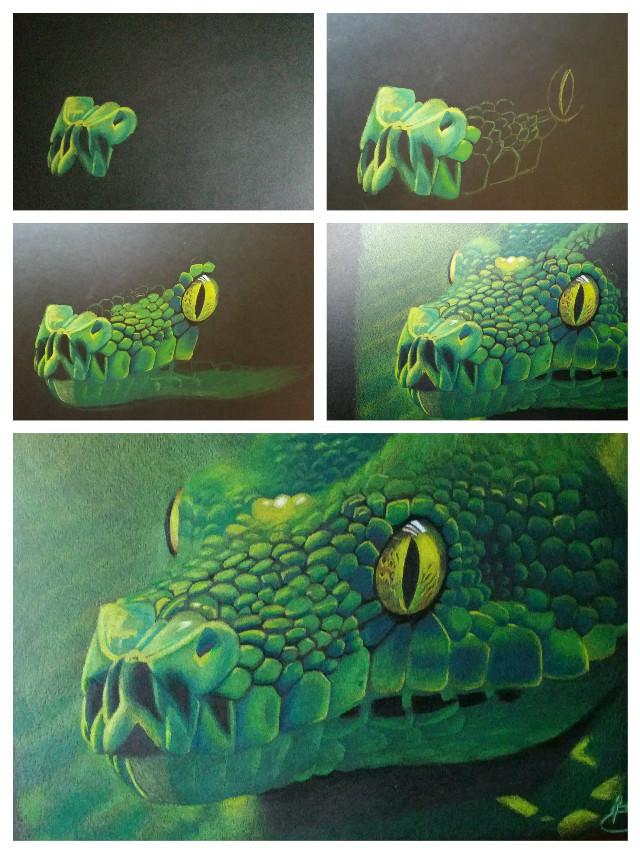 Prismacolor pencil  drawing  #colorful #colorsplash #nature #pencilart #petsandanimals #art #artwork #drawing #artistic #creative