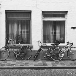 blackandwhite travel bikes