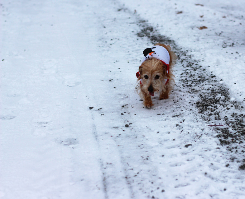 Dog days of winter  #winter #snow #doggy