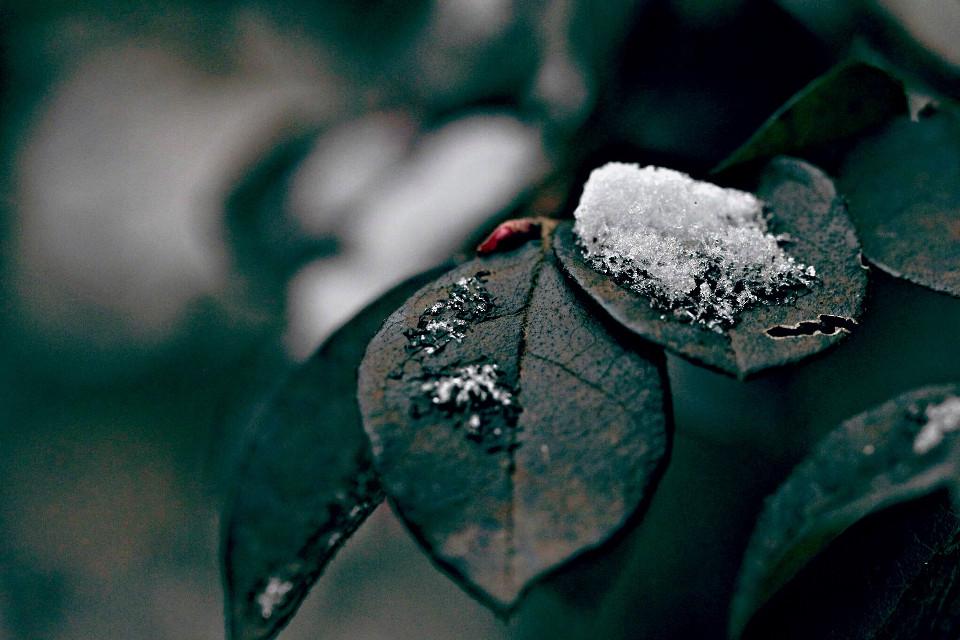 #snow #nature #stillness #featured