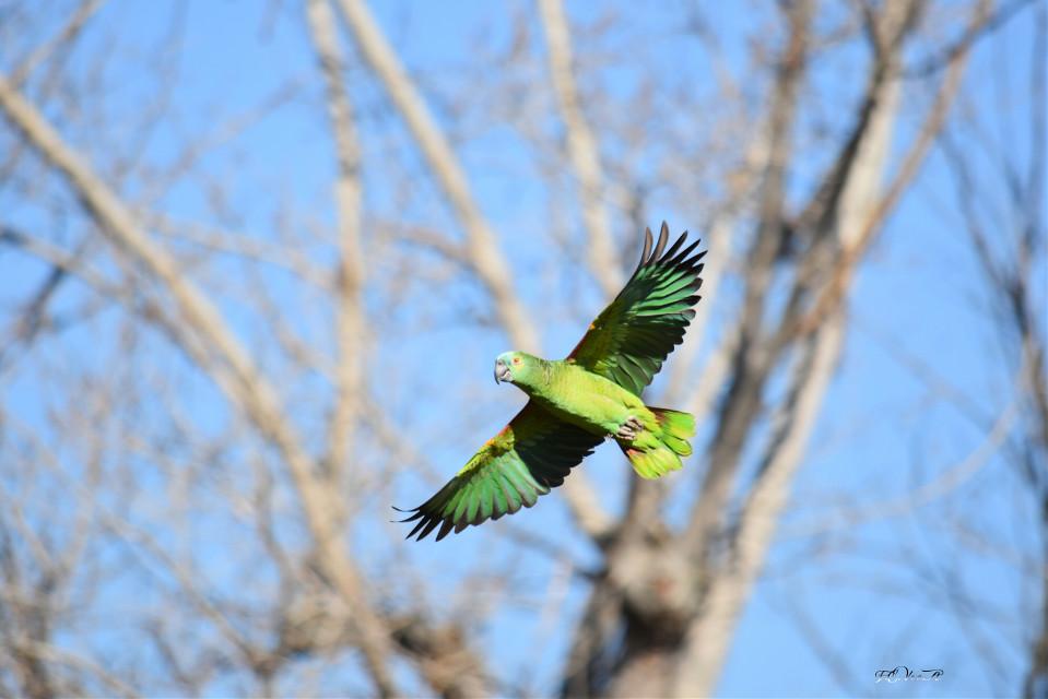 #photography zoo_Madrid #freetoedit.