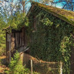 stillness abandoned old deserted shack