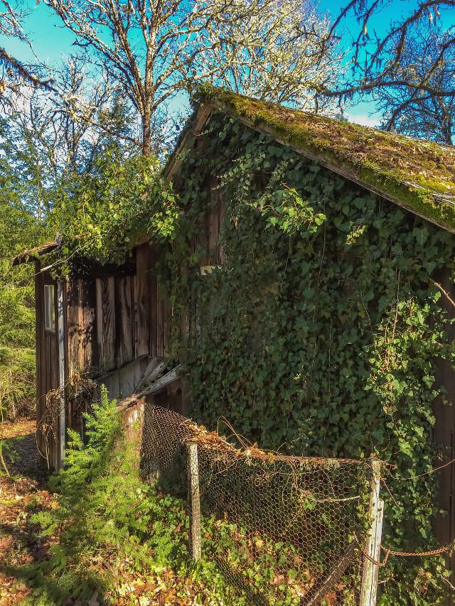 #stillness #abandoned #old #deserted #shack #overgrown