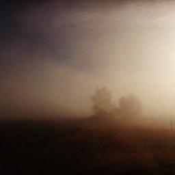 mist tree morning nature mystical
