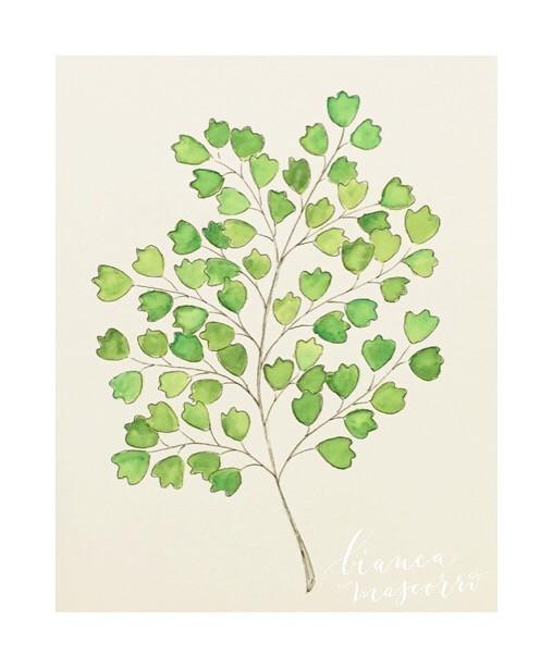 #watercolor #fern #botanical