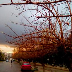 rain rainy trees clouds sun_set