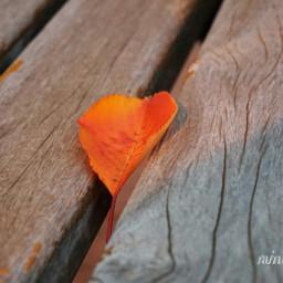 emotions nature leaves freetoedit