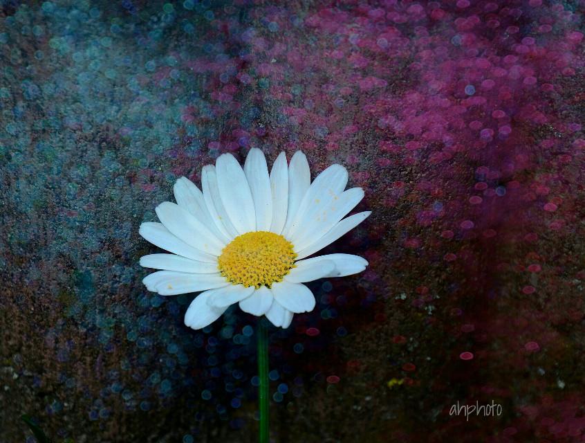 #dots #daisy #photography #madewithpicsart #edited