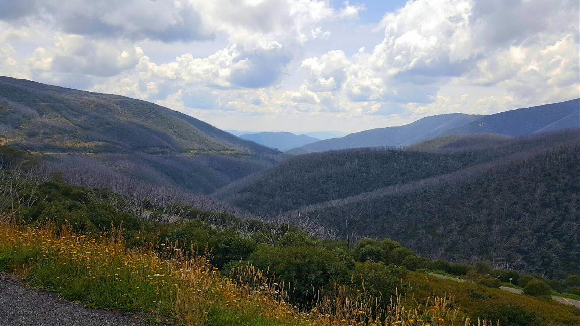 The natural beauty of Falls Creek in Victoria  #australia #victoria #vichighcountry #mountains #fallscreek #summer
