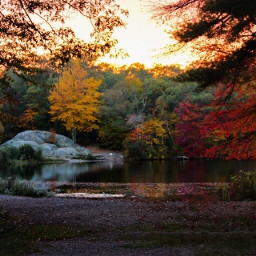park nature beauty fall autumn