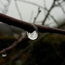 rain drop winter