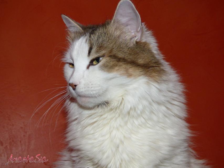 #petsandanimals #emotions #cat #eyes  #mypet #photography ❌Copying of photo is prohibited. AnastaSia (AS) ❌
