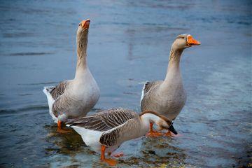 bokeh cute animal river winter