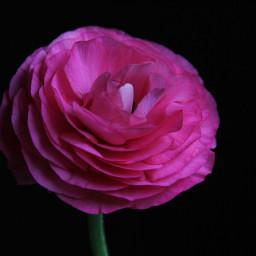 freetoedit colorsplash colorful flower photography