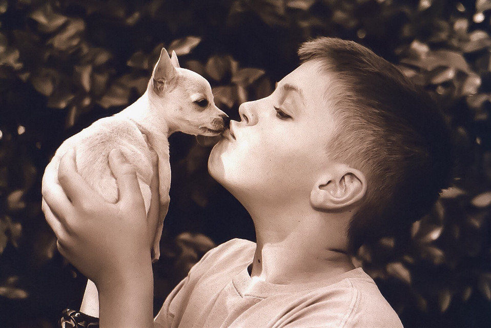 My son with our Chihuahua, Lucy💗 #MyPet #featured