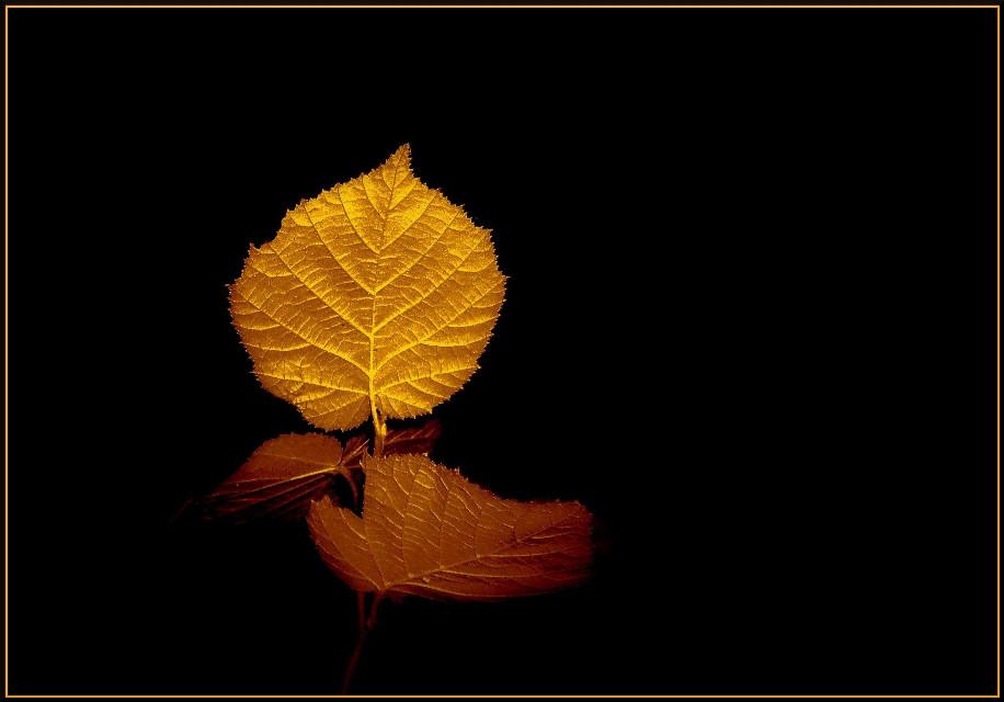 #andy's_art  #editing #leaves  #color #golden #artwork #art #frame #interesting