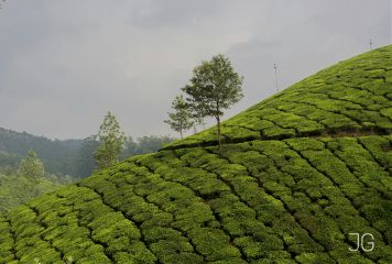 photography tea