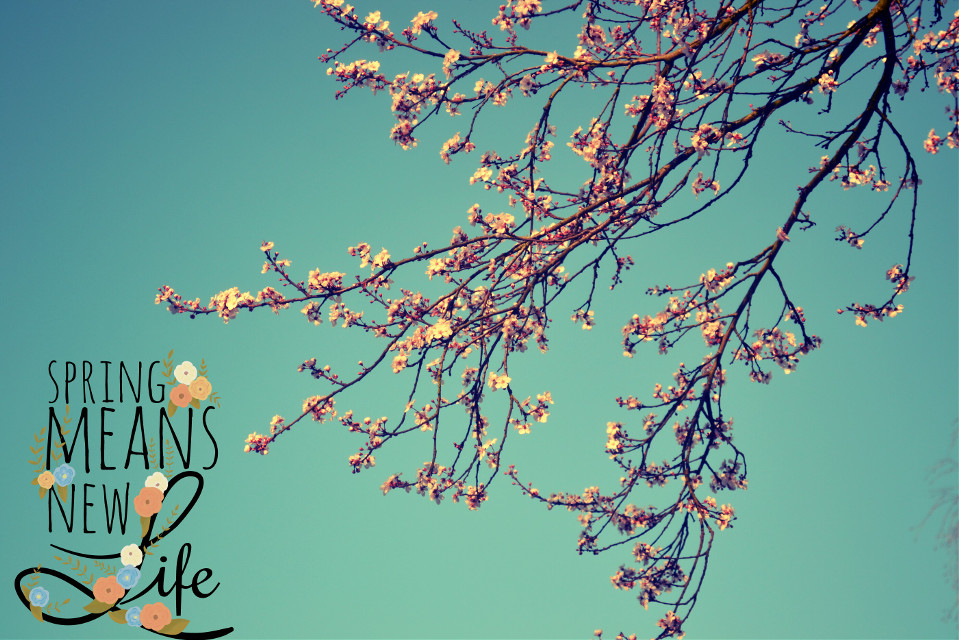 #collage #colorful #colorsplash #love #freetoedit #flower #nature #photography #spring  #tree #photofun