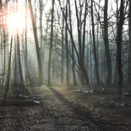 photography nature winter sun fog