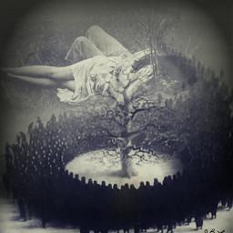 notmyphotos blackandwhite photographs trees love