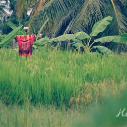 indonesia singkawang photography nature minimal