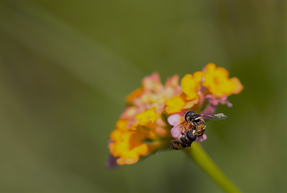 #photography  #macro  #love #colorful #bee #morning#flower #emotions  #