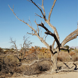 tree desert arizona nature winter