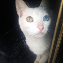 petsandanimals mypet mycat lovelycat