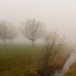 wppfog fog foggymorning foggy mist