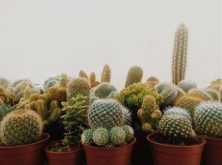 nature home decor cactus green