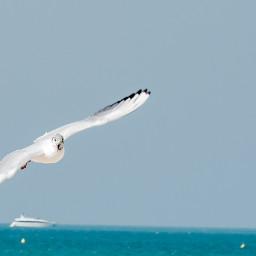 bird beach freedom photooftheday emotions