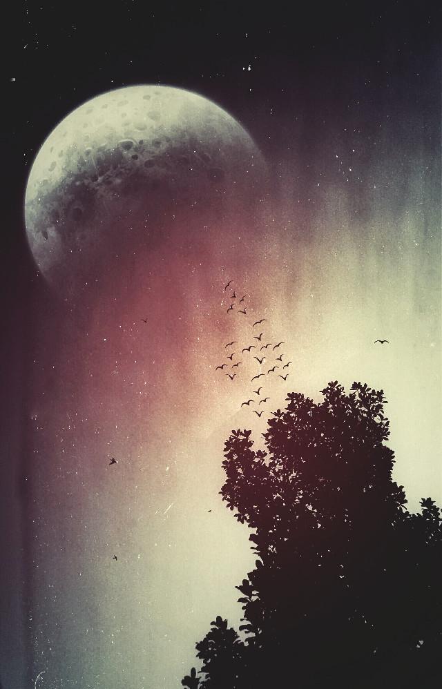 #WAPMYSTICAL Sempre sonho com essas coisas... #photography #Surreal #sky #birds #Moon #mextures   #my_dream #lunar