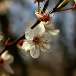 photography nature macro spring blossom