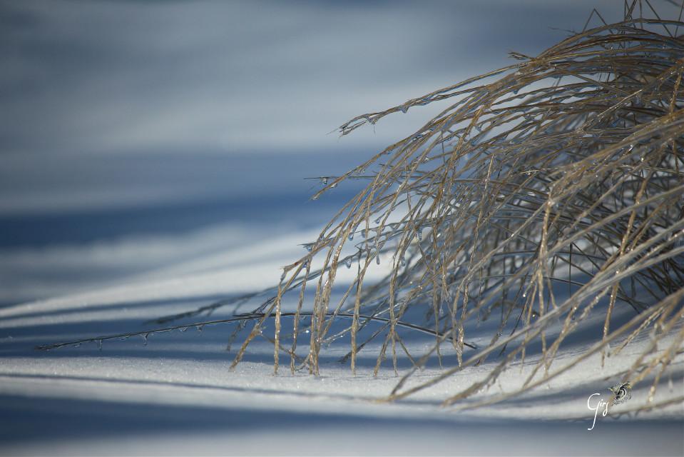 #nature  #ice