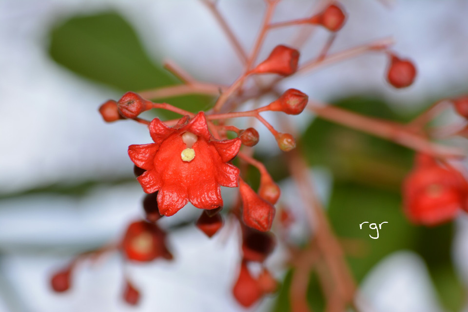 :))  #flower #nature #photography