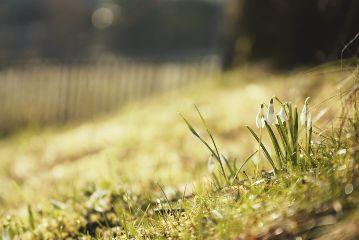flower photography travel spring switzerland freetoedit