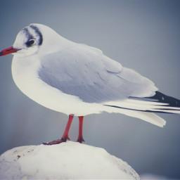 bird winter seagull