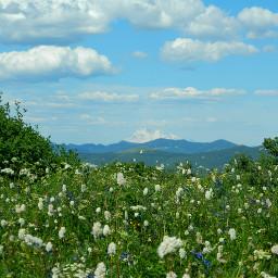 wppgreen pnw northwest nature mountain