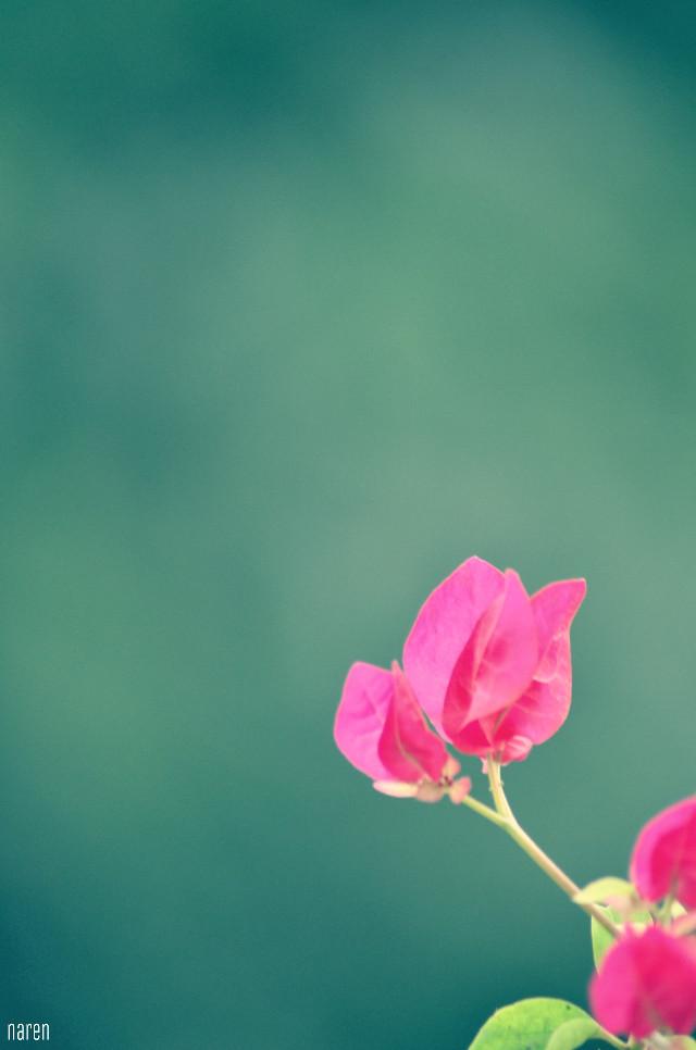#crossprocess #flower #bokeh #cute #colorful #photography  #bokeh