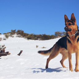 freetoedit snow photography baloo teide