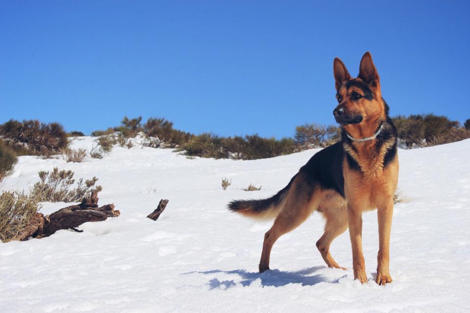 #FreeToEdit #snow #photography #baloo #Teide #Tenerifelicidad