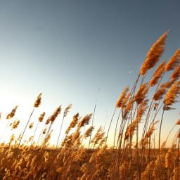 freetoedit corn nature