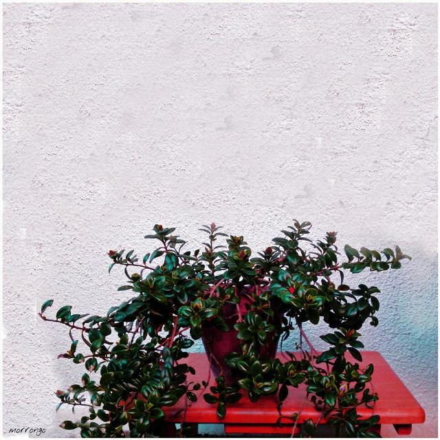 #houseplants #red #flower #photography #minimalism #minimal #lessismore  #vivid  #green