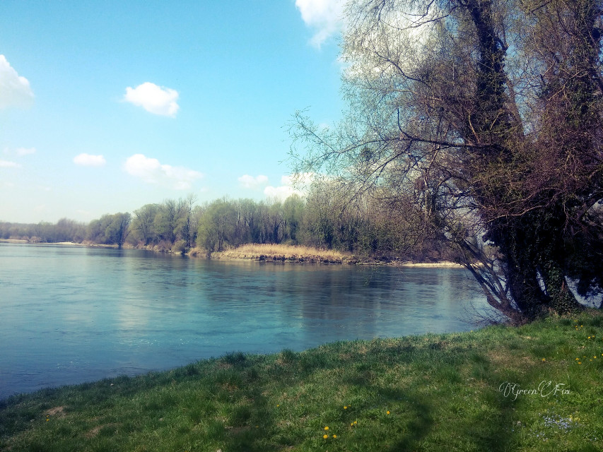#photography  #nature  #landscape  #river  #plant  #tree  #spring #sky