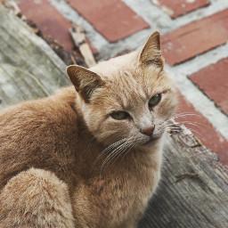 cat bricks pet