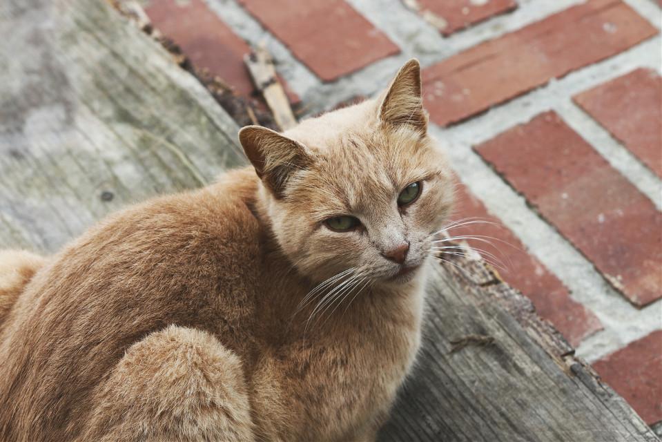 #cat  #bricks #pet